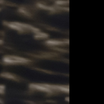 Avana striata grigia - nero