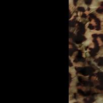 Nero lucido - marrone maculato